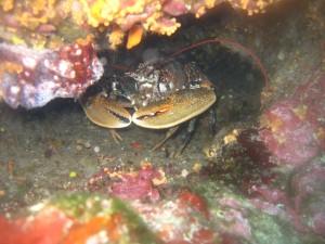 Tauchen auf der Insel Krk Styria Guenis Diving Center Krk, DIE Tauchbasis auf der Insel Krk, die Beste Adresse zum Tauchen in Kroatien